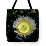 South African Flower 1 Tote Bag