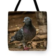 South American Pigeon  Tote Bag