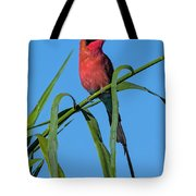 Southern Carmine Bee-eater  Tote Bag