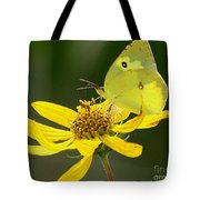 Southern Dogface Butterfly Tote Bag
