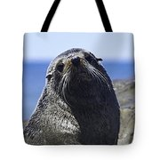 Southern Fur Seal Tote Bag