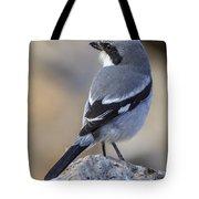 Southern Grey Shrike-- . Tote Bag