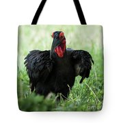 Southern Ground Hornbill Eating An Insect In Tarangire Tote Bag