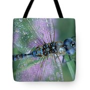 Southern Hawker Dragonfly Aeshna Cyanea Tote Bag by Tim Fitzharris