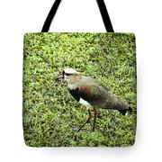 Southern Lapwing Tote Bag