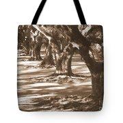 Southern Sunlight On Live Oaks Tote Bag