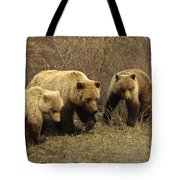 Sow Grizzly With Cubs Tote Bag