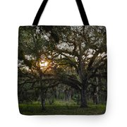 Spanish Moss During Sunset Tote Bag
