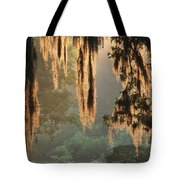 Spanish Moss In The Morning Tote Bag