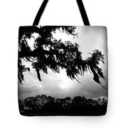 Spanish Moss In The Sunlight Tote Bag