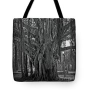 Spanish Moss Of The Tree Tote Bag
