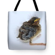 Sparrow Chick Tote Bag