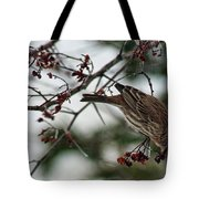 Sparrow Eating Berry Tote Bag