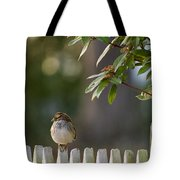 Sparrow In Colonial Williamsburg Tote Bag