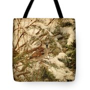 Sparrow In Winter Iv - Textured Tote Bag