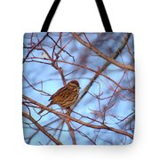 Sparrow On Blue Tote Bag