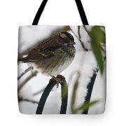 Sparrow On Fence Tote Bag