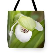 Sparrow's-egg Orchid  Tote Bag