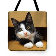Special Delivery Tuxedo Kitten Tote Bag