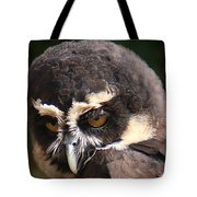 Spectacled Owl Portrait 2 Tote Bag