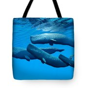 Sperm Whale Family Tote Bag