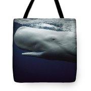 Sperm Whale Physeter Macrocephalus Tote Bag by Hiroya Minakuchi