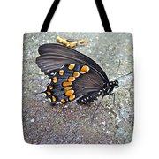 Spicebush Swallowtail Butterfly Female - Papilio Troilus Troilus Tote Bag