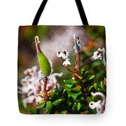 Spider Flower Seed Pod Tote Bag