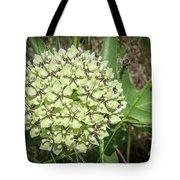 Spider Milkweed - Antelope Horns Tote Bag