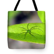 Spider On Pawpaw Tote Bag