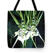 Spider Orchid Brassia Tote Bag
