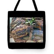 Spider Tortoise       Zoo    Indiana Tote Bag