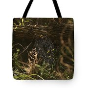 Spiders Web In Sunlight In Peters Canyon Tote Bag
