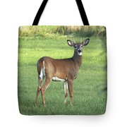 Spikehorn Whitetail Tote Bag
