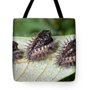 Spiky Beetle Cases Tote Bag
