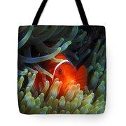 Spinecheek Anemonefish, Great Barrier Reef Tote Bag