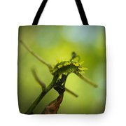 Spiny Oak Slug Moth 1 Tote Bag