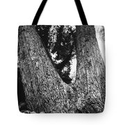 Splitting Tree Tote Bag