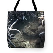 Spot Coloured Fish Tote Bag