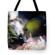 Spotted Aquarium One Fish Tote Bag