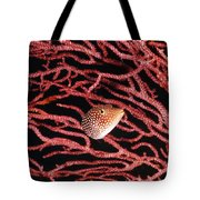 Spotted Boxfish Hides In Red Sea Fan Tote Bag