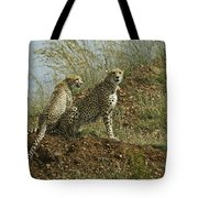 Spotted Cats Tote Bag