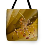 Spotted Cleaner Shrimp On Anemone Tote Bag