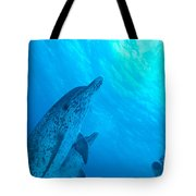 Spotted Dolphins Tote Bag