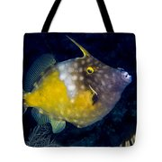 Spotted Filefish Tote Bag