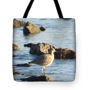 Spotted Sandpiper Keeping Sentry On The Bay Tote Bag