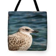 Spotted Seagull Tote Bag