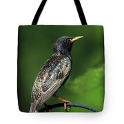 Spotted Starling Tote Bag