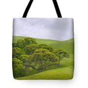 Spring At Del Valle Tote Bag