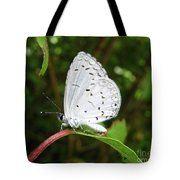 Spring Azure Butterfly Tote Bag